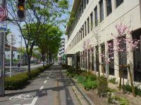 みどりの風促進区域の一つである「大阪港八尾線」